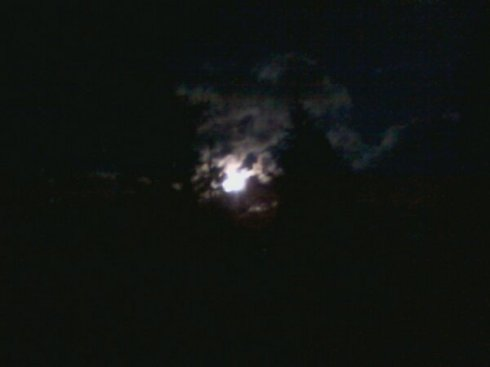 The moon pearing through the trees